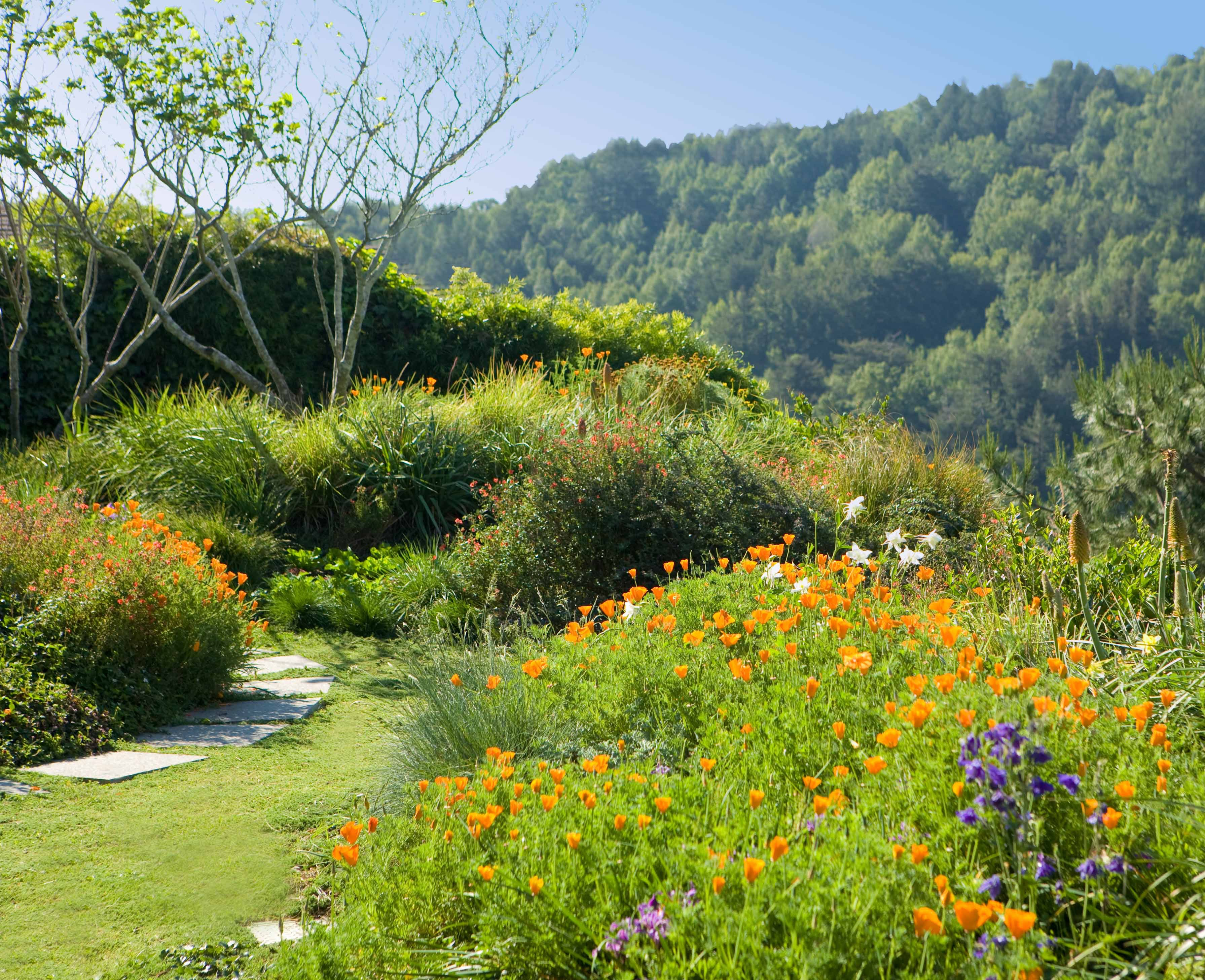 Bay-Friendly Garden-Photo from MMWD.jpg